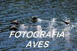 FOTOGRAFIA DE AVES